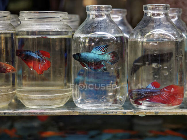 Aquarium fish market of Yogyakarta, Jawa, Indonesia ,  asia — Stock Photo