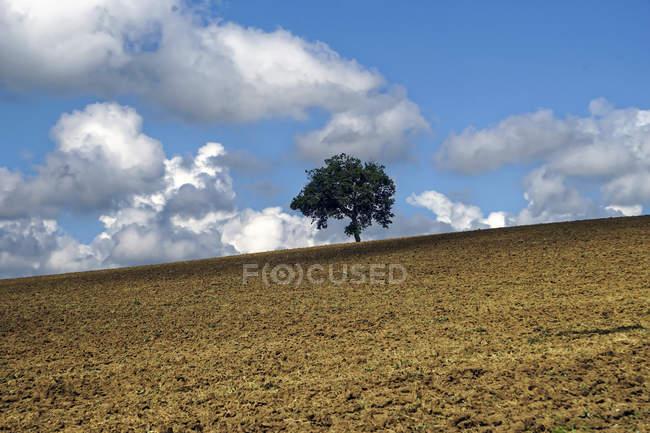 Landschaft in der Nähe des Dorfes Treia, Marken, Italien, Europa — Stockfoto