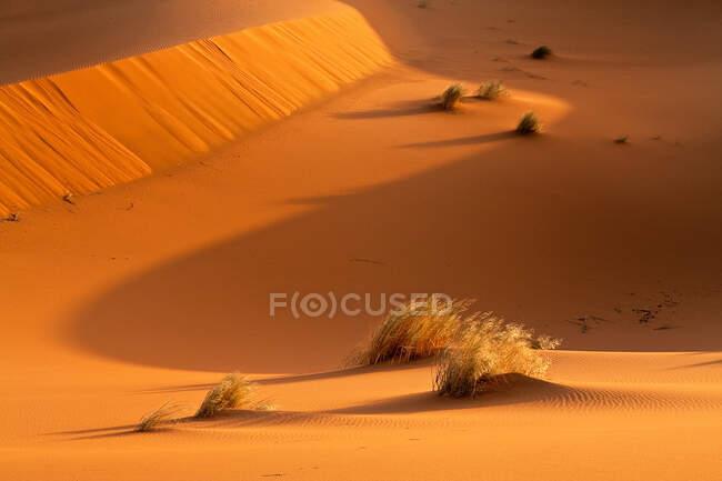 Дюны, пустыня Фаара, Моро, Северная Африка — стоковое фото