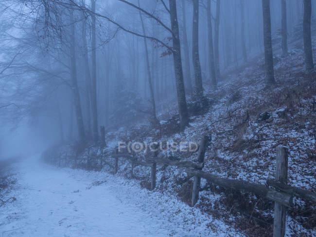 Faggio nebbia, Lessinia, Monti Lessini, Trentino, Italia, Europa — Foto stock