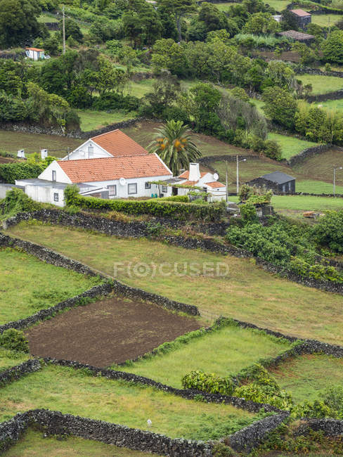 Fields near  Ribeiras.  Pico Island, an island in the Azores (Ilhas dos Acores) in the Atlantic ocean. The Azores are an autonomous region of Portugal. Europe, Portugal, Azores — Stock Photo