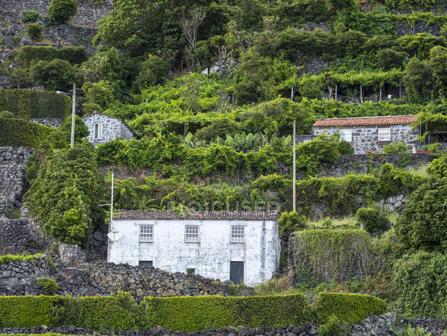 Faja dos Vimes.  Sao Jorge Island, an island in the Azores (Ilhas dos Acores) in the Atlantic ocean. The Azores are an autonomous region of Portugal. Europe, Portugal, Azores — Stock Photo