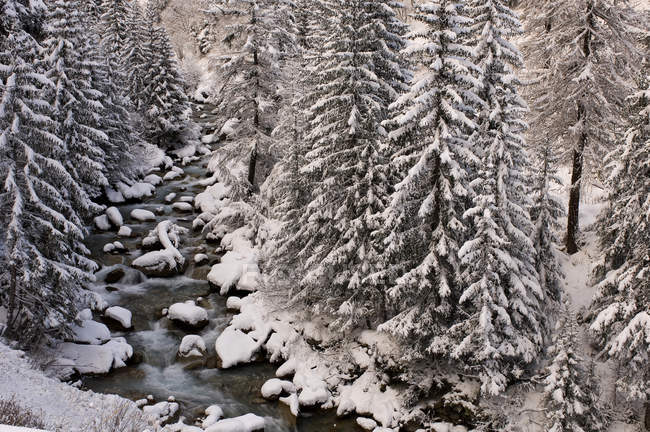 Alpine river, Val Ferret, Valle d'Aosta, Italy — Foto stock