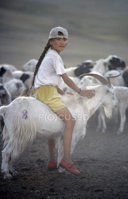 Girl riding a Cashmere goat, Mongolia, Asia — Stock Photo