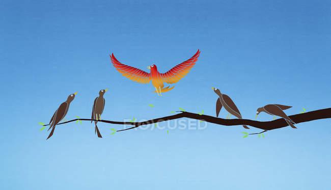 Vibrant bird flying above monochrome birds on branch — Stock Photo
