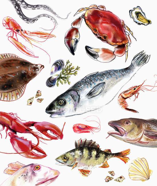 Variation von Fisch und Meeresfrüchten auf weißem Hintergrund — Stockfoto