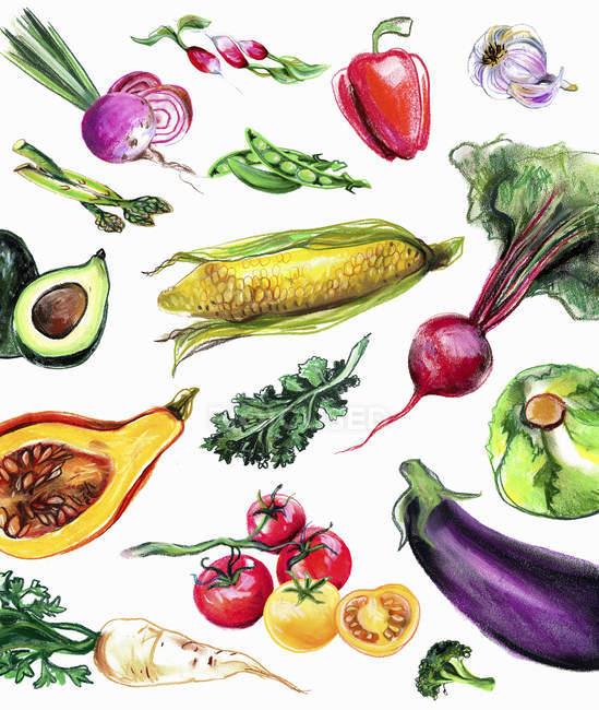 Вариации свежих овощей на белом фоне — стоковое фото
