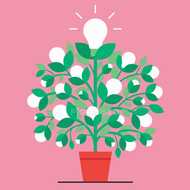Light bulb plant on pink background — Stock Photo