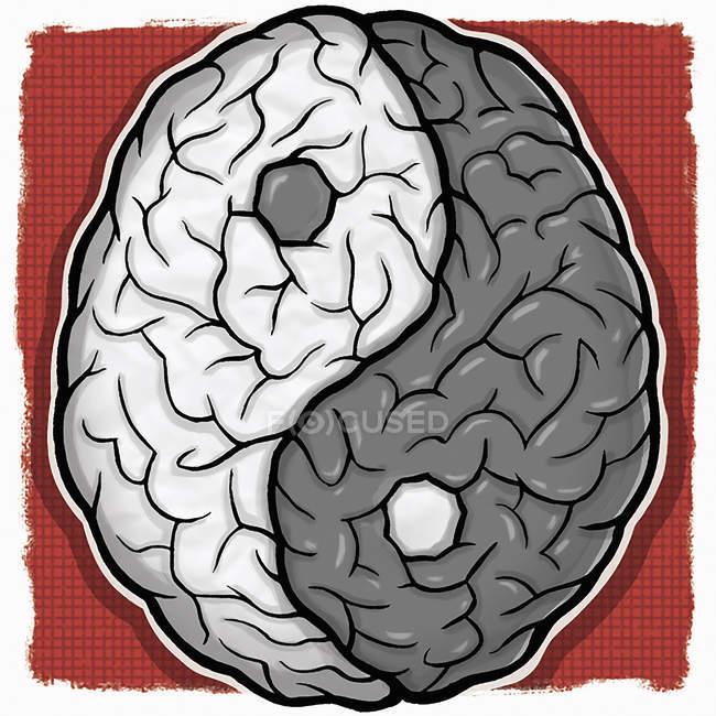 Cerebro yin y yang - foto de stock