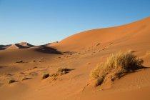 Живописный вид на песчаные холмы в дикой пустыне — стоковое фото