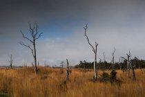 Malerische Aussicht auf gelben Grases im Feld mit Bäumen ohne Laub — Stockfoto