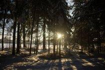 Луч солнца, освещения через деревья — стоковое фото