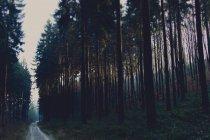 Foresta verde in estate — Foto stock