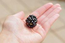 Mano che tiene uno blackberry — Foto stock