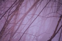 Tree bare branches view — Stock Photo