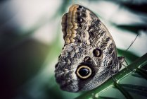 Colorful butterfly view — Stock Photo