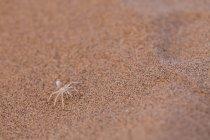Spinne im natürlichen Lebensraum — Stockfoto