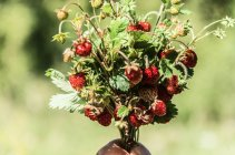 Bouquet of strawberries on branches — Stock Photo