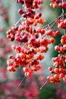 Vista del primo piano della frutta sull'albero — Foto stock