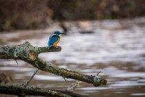 Close-up vista de pássaro empoleirar-se no ramo de árvore — Fotografia de Stock