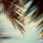 Xotic пальмовых листьев — стоковое фото
