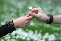 Cropped view of couple holding daisy flower — Stock Photo