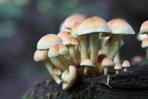 Anbau von Pilzen, selektiven Fokus — Stockfoto