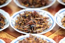 Fried insects on plates — Stock Photo