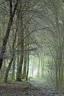 Forêt sombre au moment de la chute — Photo de stock