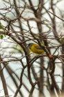 Gros plan vue d'oiseau posé sur une branche d'arbre — Photo de stock