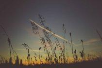 Pflanzliche Stiele von Wildpflanzen — Stockfoto