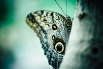 Butterfly with colorful wings — Stock Photo