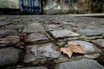 Foglio d'autunno dissolvenza su lastre di pietra — Foto stock