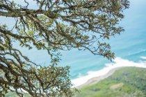 Côtier marin et arbre branches — Photo de stock