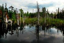 Зелений ліс на літо — стокове фото