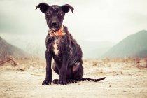 Vue de face de skinny puppy, assis sur le sol avec les montagnes en arrière-plan — Photo de stock