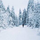 Landscape with snowy forest — Stock Photo