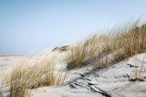 Grassgrass — Stockfoto