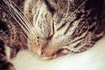 Полосатый кот спать — стоковое фото