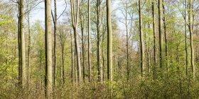 Paisaje con vista al bosque - foto de stock