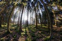 Sun shine through trees — Stock Photo