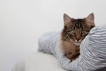 Cat sitting on striped blanket — Stock Photo
