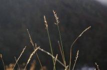 Plantes à base de plantes sauvages — Photo de stock