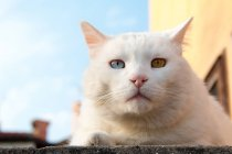 Gato olho ímpar — Fotografia de Stock