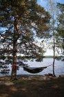 Гамаку на деревах, на озеро в лісі — стокове фото