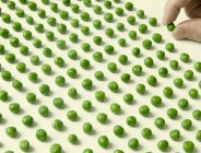 Human hand putting peas in rows — Stock Photo