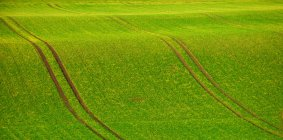 Зеленая волнистая поле — стоковое фото
