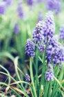Blossoming garden flowers — Stock Photo