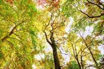 Дикий ліс на осінь — стокове фото