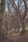 Kahle Bäume anzeigen — Stockfoto
